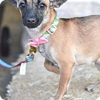 Adopt A Pet :: Ruthie Roo - Salt Lake City, UT