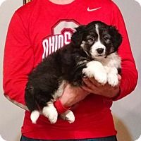 Adopt A Pet :: Rey - New Philadelphia, OH