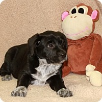 Adopt A Pet :: This - Plainfield, CT