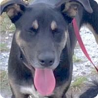 Adopt A Pet :: Kodak - Tavares, FL