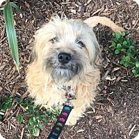 Adopt A Pet :: Chardonnay - Encino, CA