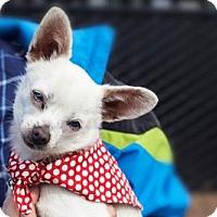 Adopt A Pet :: Otto - 24069 - Petaluma, CA