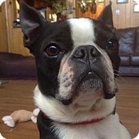 Adopt A Pet :: Obie (rbf) - Harrisonburg, VA