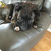 Adopt A Pet :: Lambert - Hurst, TX