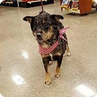 Adopt A Pet :: Sage - Las Vegas, NV