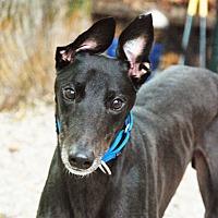 Adopt A Pet :: DJay - Ware, MA