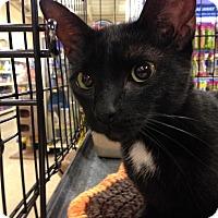 Adopt A Pet :: Callie - Toledo, OH