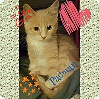 Adopt A Pet :: Pacman - Harrisburg, NC