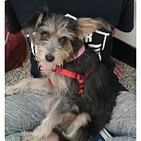 Adopt A Pet :: Rae - Thousand Oaks, CA