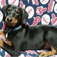 Adopt A Pet :: Tito - Bristolville, OH