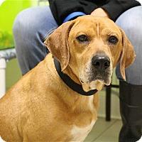 Adopt A Pet :: Rusty - Elyria, OH