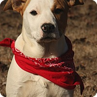 Adopt A Pet :: Dixie - Haggerstown, MD