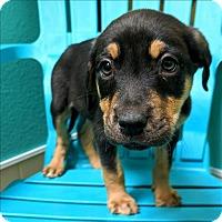 Adopt A Pet :: Felicity - Riverside, CA