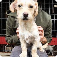 Adopt A Pet :: Fiona - Eugene, OR