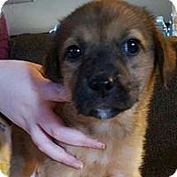 Adopt A Pet :: Fuzzy - pending - Manchester, NH