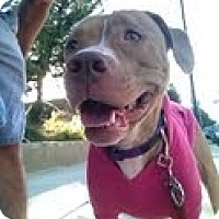 Adopt A Pet :: JACKIE - Valley Village, CA
