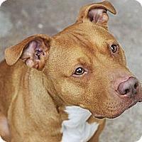 Adopt A Pet :: Sully - Des Peres, MO