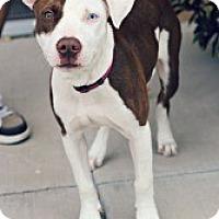 Adopt A Pet :: Skyler - Justin, TX