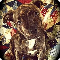 Adopt A Pet :: Keeba - Cypress, CA