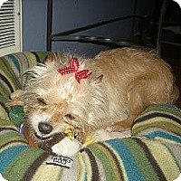 Adopt A Pet :: DAISY - Mahopac, NY