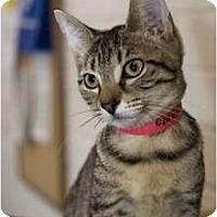 Adopt A Pet :: Cinnamon - New Port Richey, FL