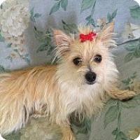 Adopt A Pet :: Fifi - Marlton, NJ