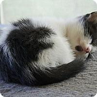 Adopt A Pet :: Sarah - Victor, NY
