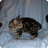 Adopt A Pet :: Bucky - Simpsonville, SC