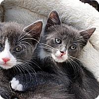 Adopt A Pet :: Yoda - Barnegat, NJ