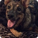 Adopt A Pet :: AYAH