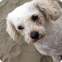 Adopt A Pet :: Tater Tot - San Francisco, CA