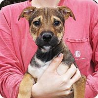 Adopt A Pet :: Geoff - Chicago, IL