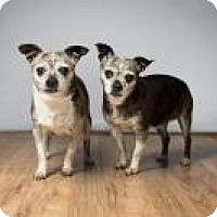 Adopt A Pet :: Lily & Zoey - Howell, MI