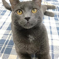 Adopt A Pet :: Hemi - Webster, MA