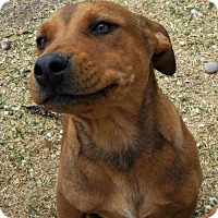 Adopt A Pet :: **CZR - Peralta, NM