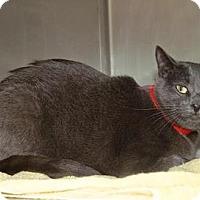 Adopt A Pet :: Stella - Englewood, FL