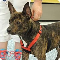 Adopt A Pet :: Roscoe - Humble, TX