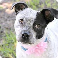 Adopt A Pet :: Elsa - Loxahatchee, FL