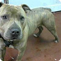 Adopt A Pet :: PAPI - Atlanta, GA