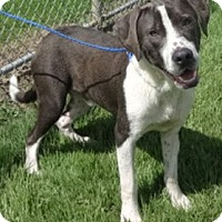Adopt A Pet :: Ceasar - Olive Branch, MS