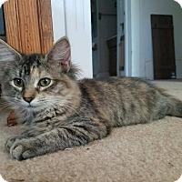 Adopt A Pet :: Maizy - Stafford, VA
