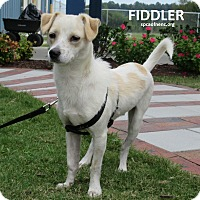 Adopt A Pet :: Fiddler - Elizabeth City, NC