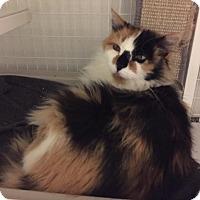 Adopt A Pet :: Gypsy - Gunnison, CO