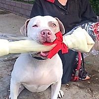 Adopt A Pet :: Hunk-a-Chunk - Beverly Hills, CA