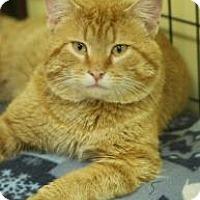 Adopt A Pet :: Houdini - West Des Moines, IA