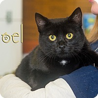 Adopt A Pet :: Noel - Somerset, PA