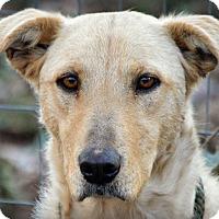 Adopt A Pet :: Sunshine~meet me!~ - Glastonbury, CT