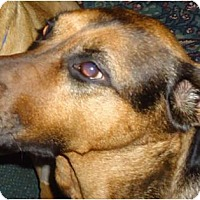 Adopt A Pet :: Haley - Cleveland, OH