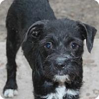 Adopt A Pet :: Angelina-MEET HER!! - Norwalk, CT