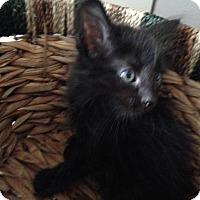 Adopt A Pet :: Lena - San Ramon, CA